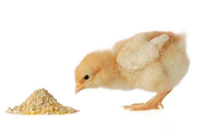 سوربیتول در رژیم غذایی طیور