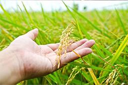 مالتودکسترین برنج