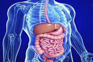 تاثیر اسید سیتریک در دستگاه گوارش