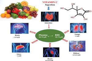 عملکردهای فیزیولوژیکی اسیداسکوربیک در بدن