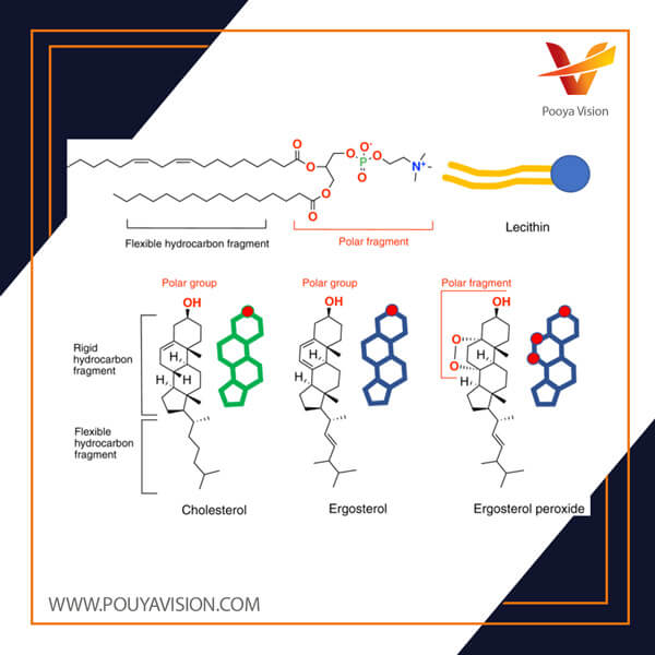 ساختار لسیتین