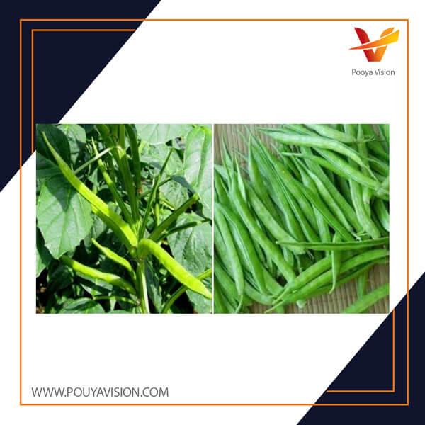 گیاه گوار در ایران