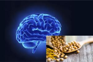 نقش لسیتین در بهبود حافظه و کارآیی مغز افراد اوتیستیک