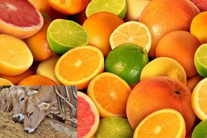فواید استفاده از اسید اسکوربیک در مواد دامی