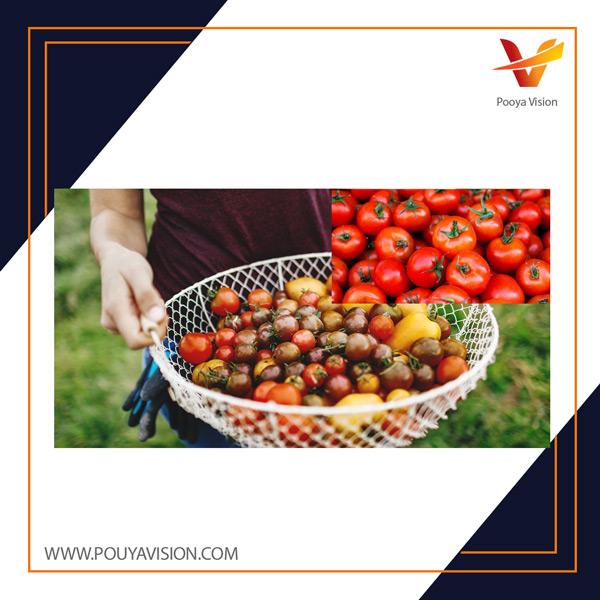 کاهش اثرات مضر اسید اسکوربیک بر گوجه فرنگی