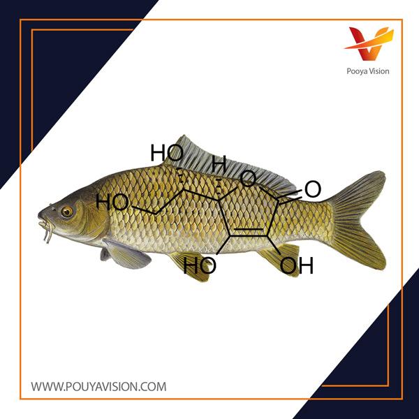 مقایسه تجربی اثرات اسید اسکوربیک و تیامین در جلوگیری از ضایعات بافتی ناشی از سرب در برخی بافت های ماهی کپور