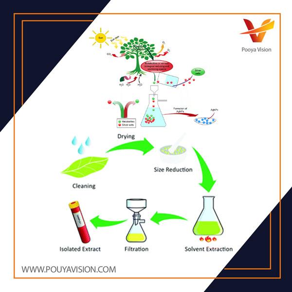 سنتز کامل سبز از دکستروز باعث کاهش نانوذرات نقره، خواص ضد میکروبی و حساسیت آن می شود