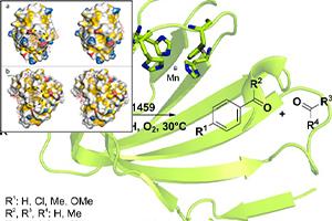 تعاملات هیدروفوبیک سوکرالوز با ساختارهای پروتئینی
