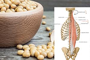 لسیتین و کاهش چربی در عضلات
