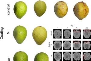 اثر پوشش های خوراکی آدامس - کربوکسی متیل سلولز در افزایش طول عمر گواوا تازه و بریده