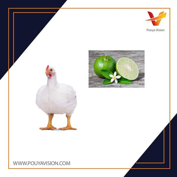 اثر مولکولی و غلظت های مختلف اسید اسکوربیک بر عملکرد، هضم غذائی و روده ای جوجه های گوشتی